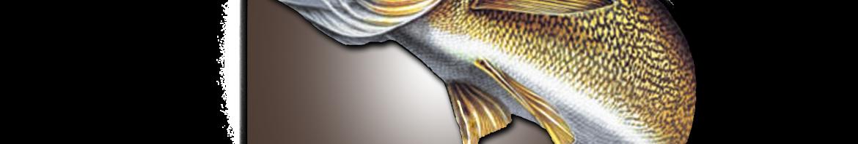 Indiana Walleye Anglers Association